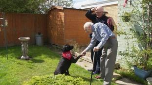 Charity dog meeting elderly man