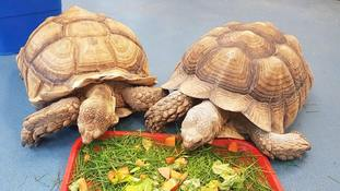 Police appeal after four giant tortoises were stolen from Dorset college