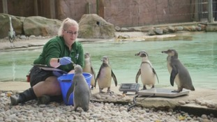 Animals on the scales for London Zoo weigh-in