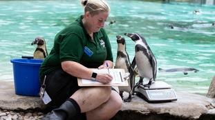 Check out these adorable animals on weighing day at London Zoo