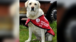 Fire service dogs honoured with the animal equivalent of the OBE