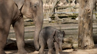 Twycross Zoo no longer has elephants as final two moved to Blackpool for breeding programme