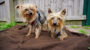 New owner needed for dog home's oldest siblings