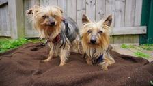 Dogs Trust Loughborough