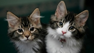Cats in Omaui may have to be neutered, microchipped and registered.