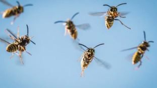 Warnings issued after increase in numbers of wasps