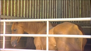 STATEMENT on horse meat scandal