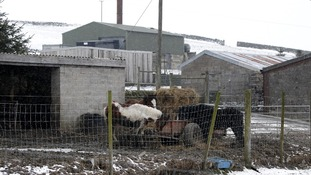 Man arrested in Yorkshire as part of horse meat inquiry