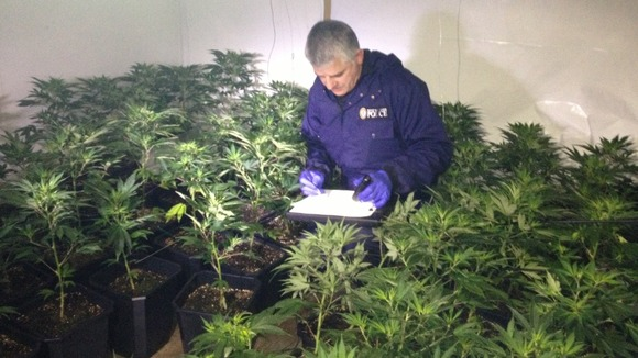 Rick Stevens from the West Midlands Police Cannabis Disposal team takes stock of their latest seizure