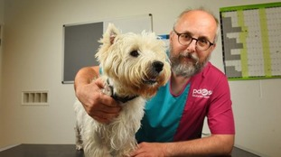 Vet Paul Cossey with 18-month-old West Highland terrier Buddy.