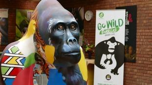 Durrell launches Go Wild Gorillas project