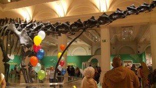 Dippy the Dinosaur is saying goodbye as it heads to Belfast.