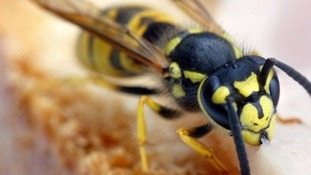 Woman attacked by thousands of wasps after disturbing nest in Newbury