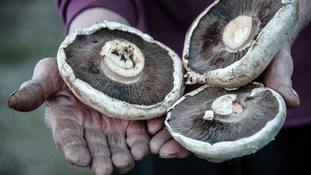 Fungi have many uses and experts are hoping they can tackle environmental problems.