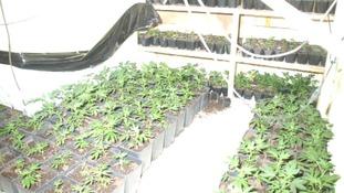 Rural areas being increasingly used by drug dealers