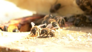 Environmentalists gather in Jersey to discuss Asian Hornet