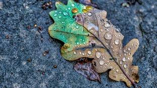 Autumn in Blackburn SHAFIK KHAN