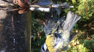 "Hunt for ""cruel"" bird killers setting glue traps at nature reserve"