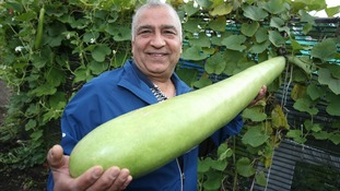 Green-fingered resident grows vegetable to more than a metre long