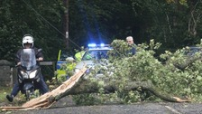 Storm Ali hits Dumfries and Galloway Tree down in Kirkcudbright
