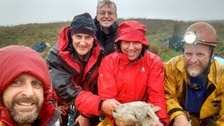 Rescuers with sheep.