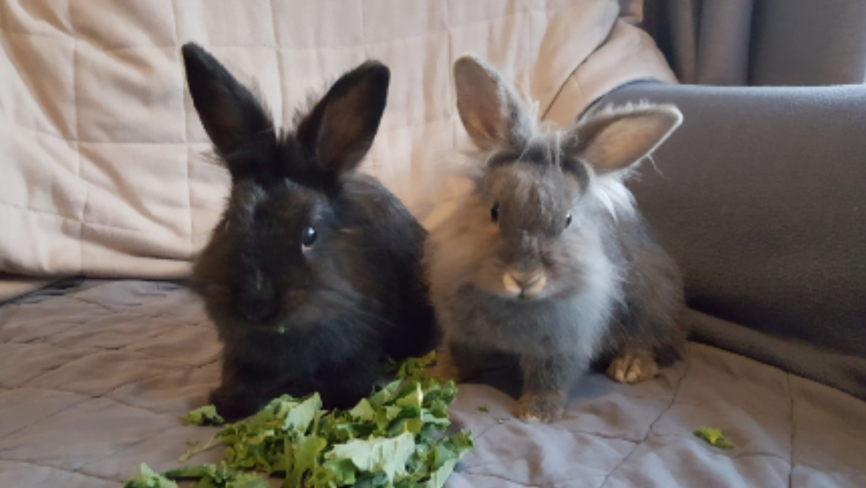 International Rabbit Day - vgr1.com