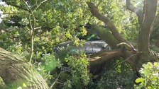 Driver has lucky escape after falling tree hits car