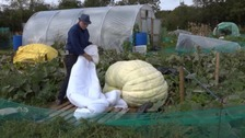 Graham and his 50 stone pumpkin