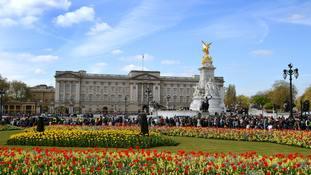 Man arrested at Buckingham Palace entrance on suspicion of possessing a Taser
