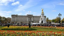 Man arrested at Buckingham Palace entrance on suspicion of possessing a Taser