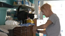 Woman with terminal cancer desperate to rehome 40 cats