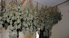 Kendal man sentenced for home cannabis farm