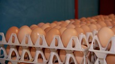 Smaller produce in Guernsey due to egg-stremely hot summer
