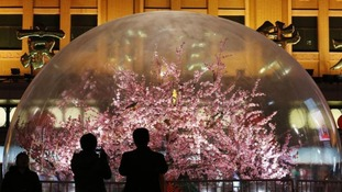 Pedestrians look at a decoration of a cherry blossom tree displayed in a dome at a shopping district
