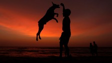 A boy plays with his pet on a beach as the sun sets in Colombo