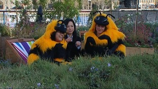 Friends of the Earth campaign to help bees