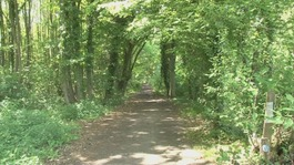 Oaken Wood, Maidstone, Woodland Trust