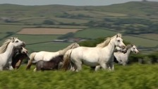 Horses running in field