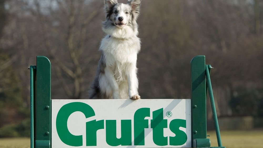 Young Crufts Competitors Arrive Before Thursday S Launch