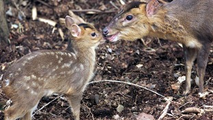 Research calls for mass cull of deer