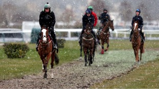 Horses from Henry de Bromhead's stable exercise on the gallops