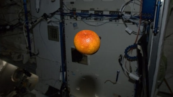 Hadfield posted this photo with the caption &quot;Beautiful blood orange, freshly-delivered from California. It was delicious - thanks&quot;