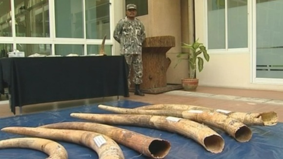 A seized haul of ivory under guard