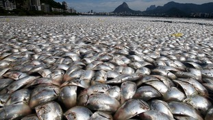 Dead fish at the Rodrigo de Freitas lagoon after oxygen levels dropped due to pollution