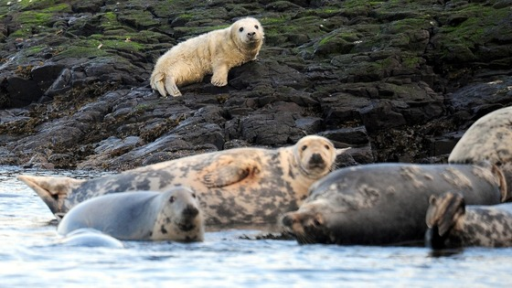The Farne Islands are home to around 6,000 grey seals