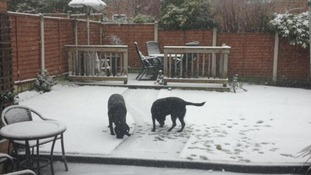 Dogs in snowy garden