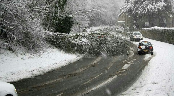 Tree on road in Holywell