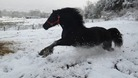 Jet the horse in the snow
