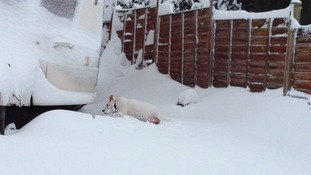 Sam the dog in the snow
