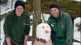 Keepers Adam Walker (left) and Jay Haywood built an enrichment snowman for tigers Daseep (Sumatran) and Tschuna (Amur)